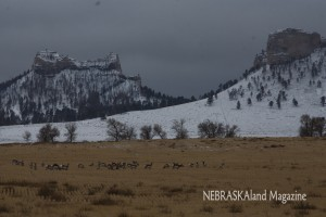 Crow Butte Pronghorn