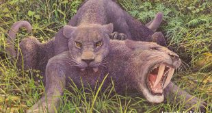 Saber-toothed cats, by Jan Vriesen