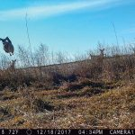 Russ Coffey from York checked his trail cameras and caught this interesting picture of deer.