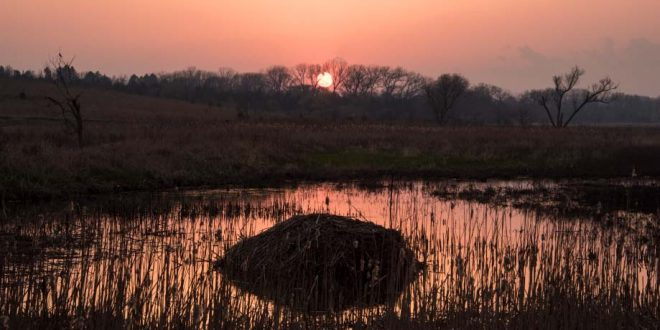 The sun sets as shadows fall over a saline wetland and a muskrat hut at the Little Salt Fork Marsh Preserve.