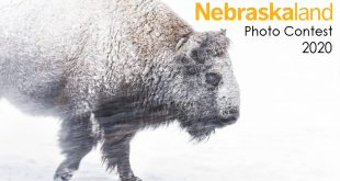 """Perseverance"" photo contest entry of Bison in blowing snow by Eric Wellman"